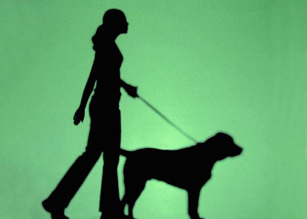 Perro guía, perro guía invidente, perro guía ciego